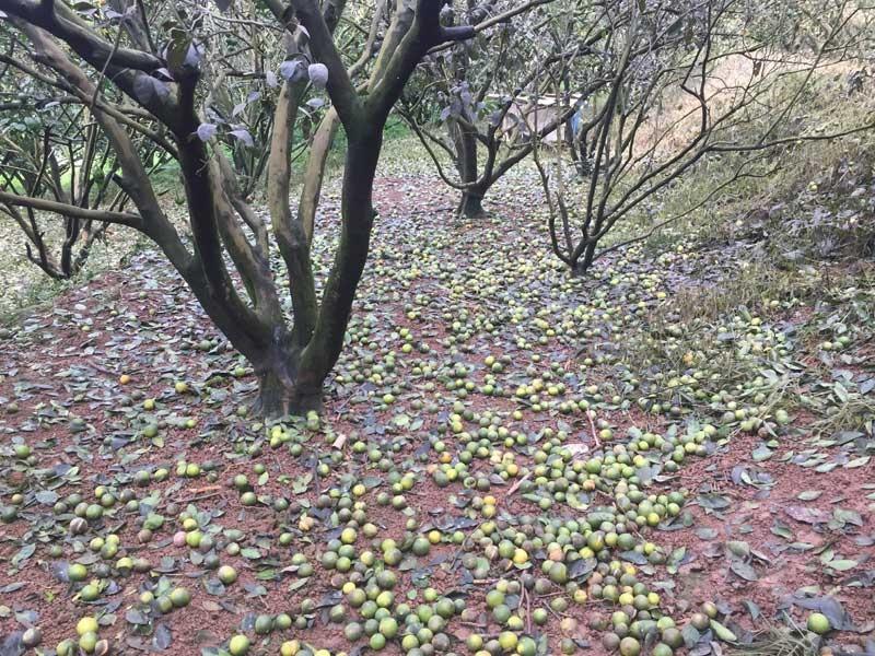 Dấu hiệu của cây bị nhiễm mặn để lại hậu quả cho cây trồng</span>