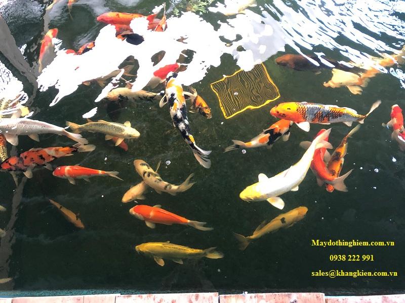 Bút đo độ mặn AZ 8372 Hồ cá Koi